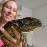 La consultation vétérinaire pour les nacs, varans, les lapins et les tortues est très importante et repose sur une observation précise